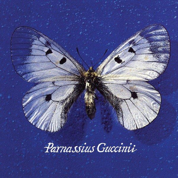 """""""Parnassius Guccinii"""" – Francesco Guccini"""