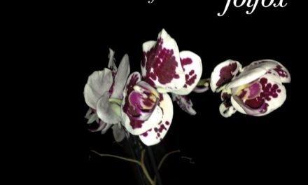 "Orchidee, morte e rinascita: ""Folfiri o Folfox"" – Afterhours"